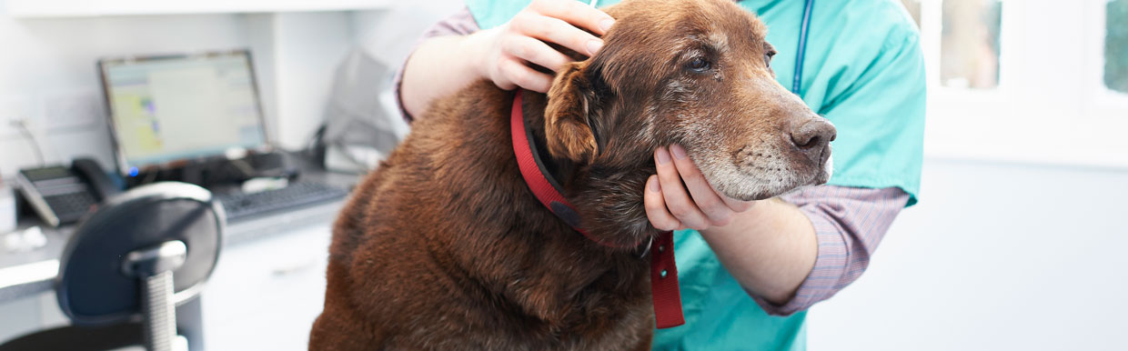 Worm control in dogs