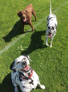 Staff dogs at Valley Veterinary Group